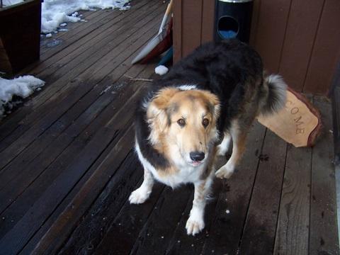Ollie, Rod's Dog