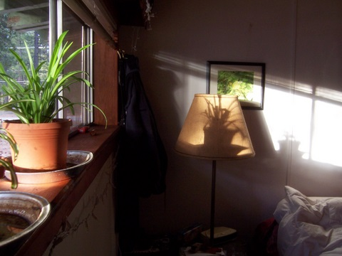 Jamie's pic of potted plant